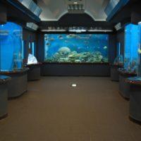 渋川マリン水族館2