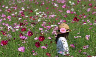 2017(最優秀賞)「花いっぱい+」寒竹+義彦
